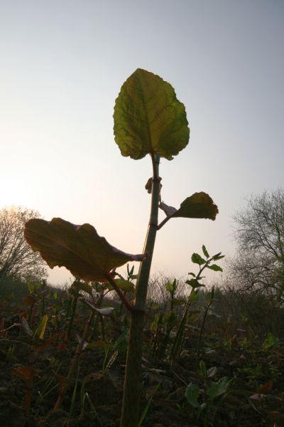 01-2009-04-30_le-regarde-de-la-chenille_0001_.jpg