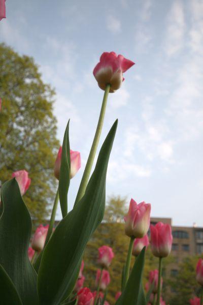 03-2009-04-30_le-regarde-de-la-chenille_0004_.jpg