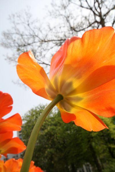 04-2009-04-30_le-regarde-de-la-chenille_0005_.jpg