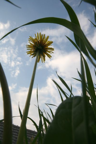05-2009-04-30_le-regarde-de-la-chenille_0007_.jpg
