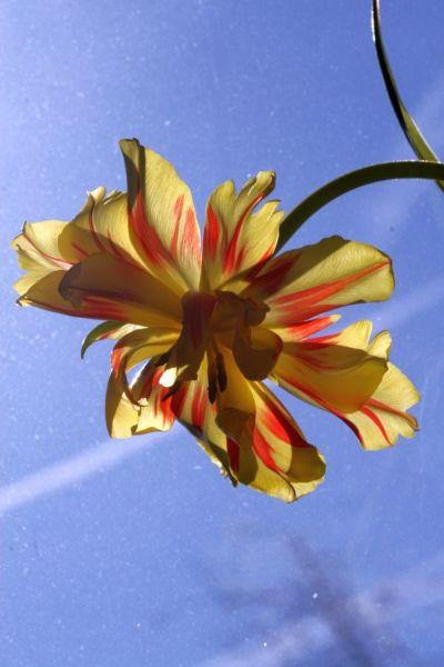13-lali-ar-2009-03-18-flores-compagnie_0069_.jpg