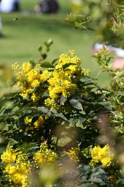 2009-04-04-du-jaune_0002_.jpg