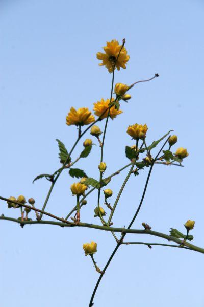 2009-04-04-du-jaune_0004_.jpg