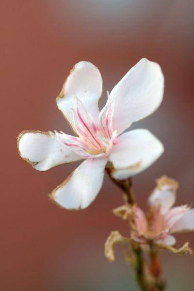 030-fleur-dailleurs-img_0110.jpg